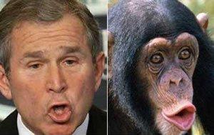 goerge-bush-et-chimpanzé