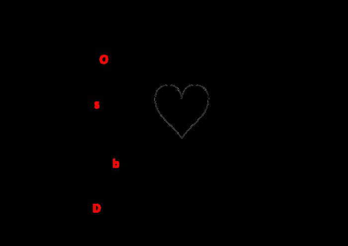 Etapes de la CNV (source Wikipedia)